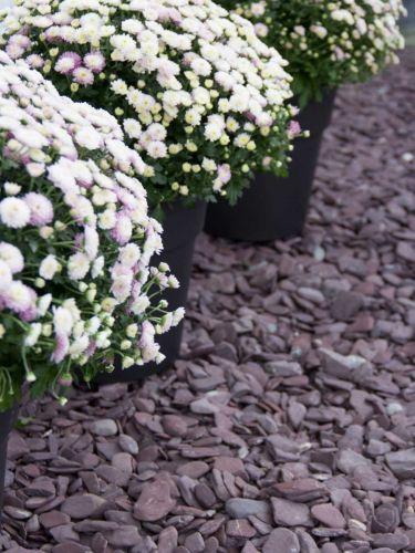 Flat Pebbles paars 30 - 60mm (3 - 6cm) aangelegde siertuin