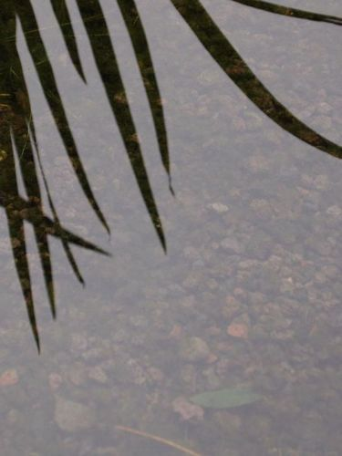 Lavakorrel aangelegd in zwemvijver