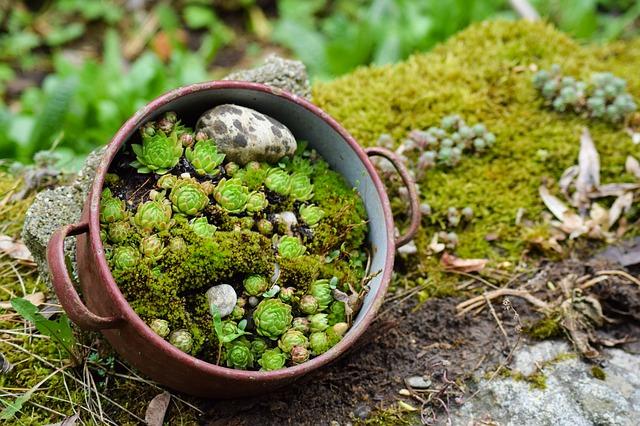 Vetplanten rotstuin
