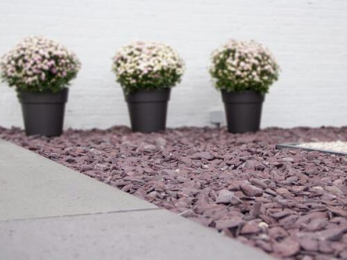 Flat Pebbles paars aangelegd