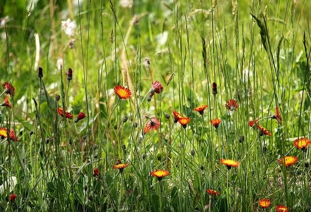 Prairietuin bloemen
